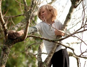 ft-fr-kids-tree-climb