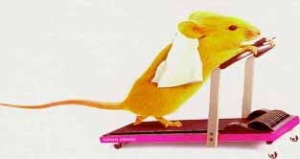 Treadmill Mouse